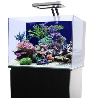Großartig 30 Gallon Rimless Nano Cube Aquarium w/ 36 Stand & 108W Pacifica  FP94