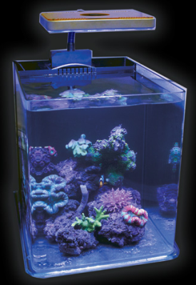 8 gallon jbj rimless biotope aquarium tank ships free. Black Bedroom Furniture Sets. Home Design Ideas